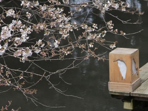 桜とライト_MG_1132