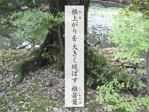03新田さん