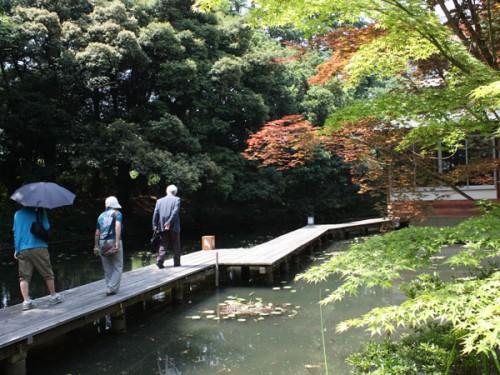 池散策IMG_7437