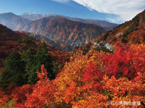白山スーパー林道720_800