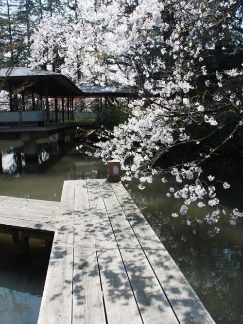 桜桟橋たてIMG_1686