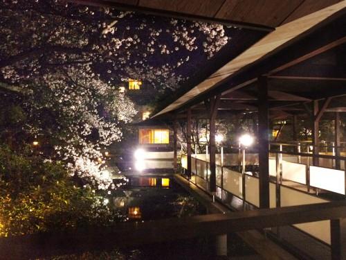 夜桜_渡り廊下P1160161