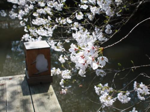 桜_トリライトIMG_1689