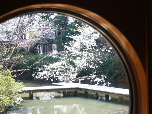 桜_茶室丸い窓IMG_1700