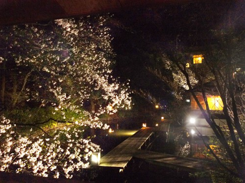 夜桜桟橋P1160158