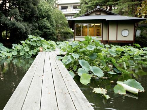 庭園_68T5358茶室寄り