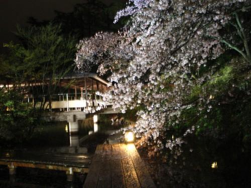 桜コンサートIMG_8559