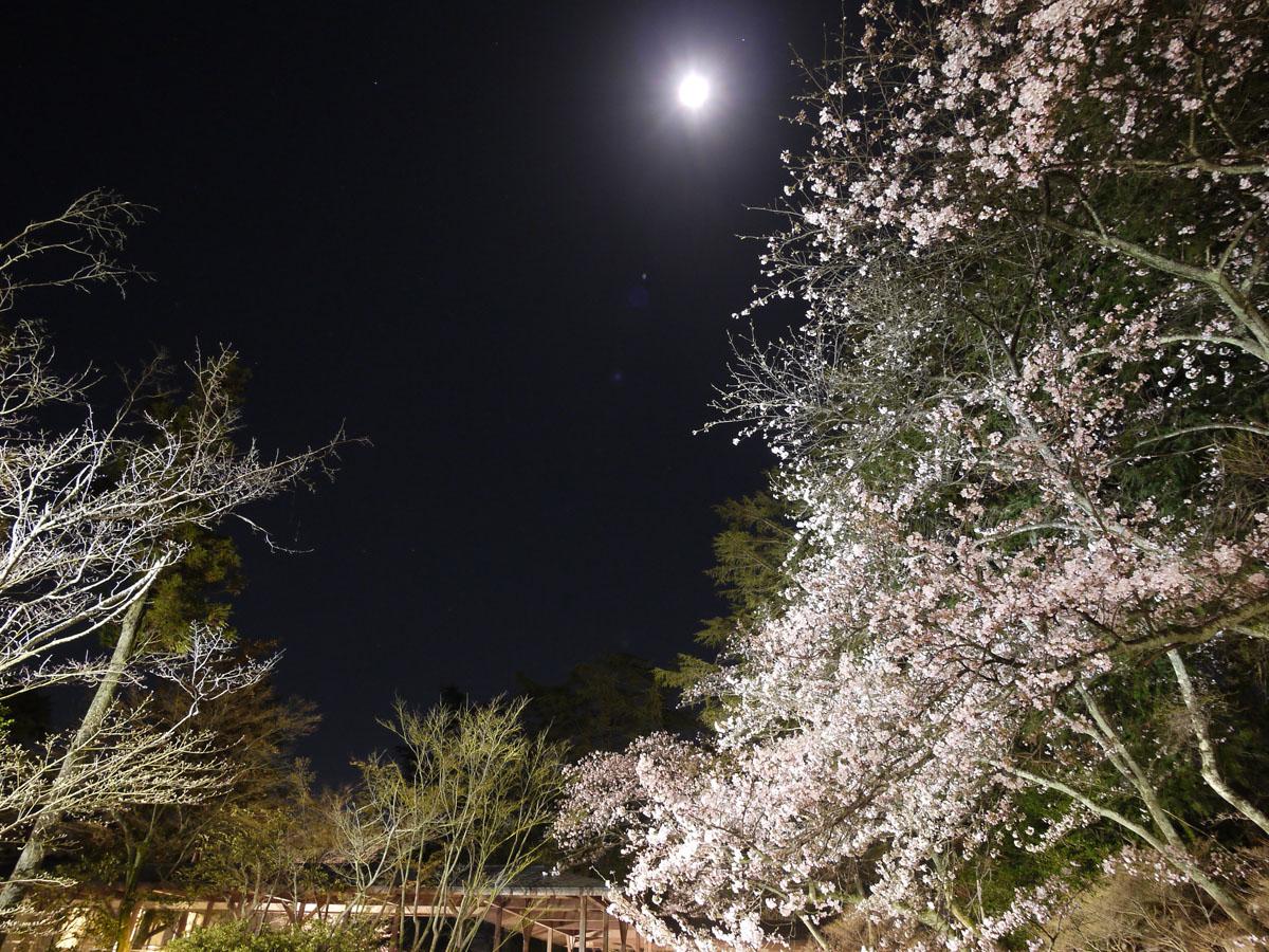 夜桜_1170797