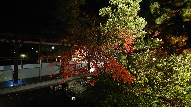 181122紅葉_福田さん_o