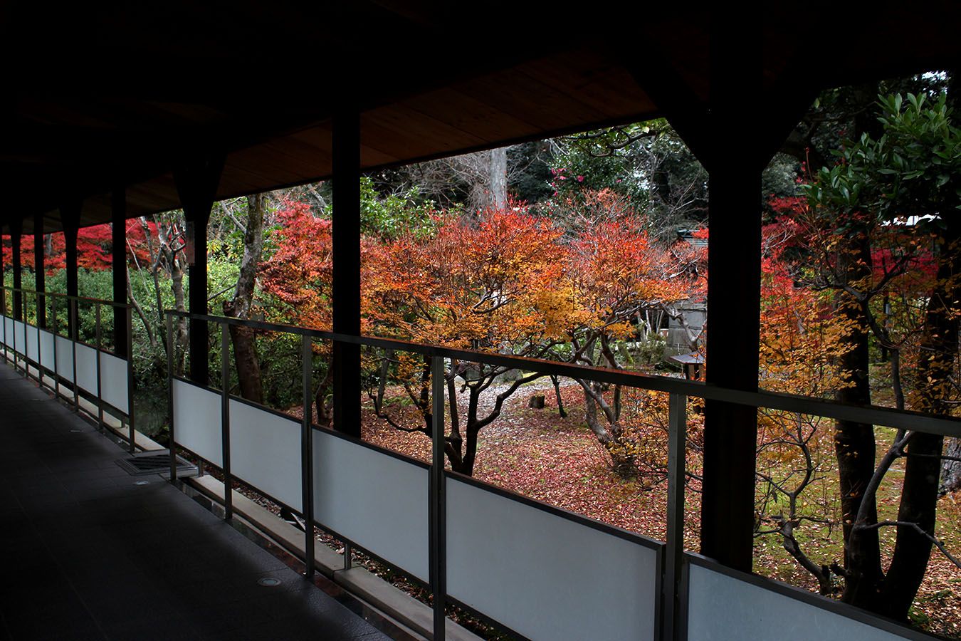 冬紅葉IMG_3211