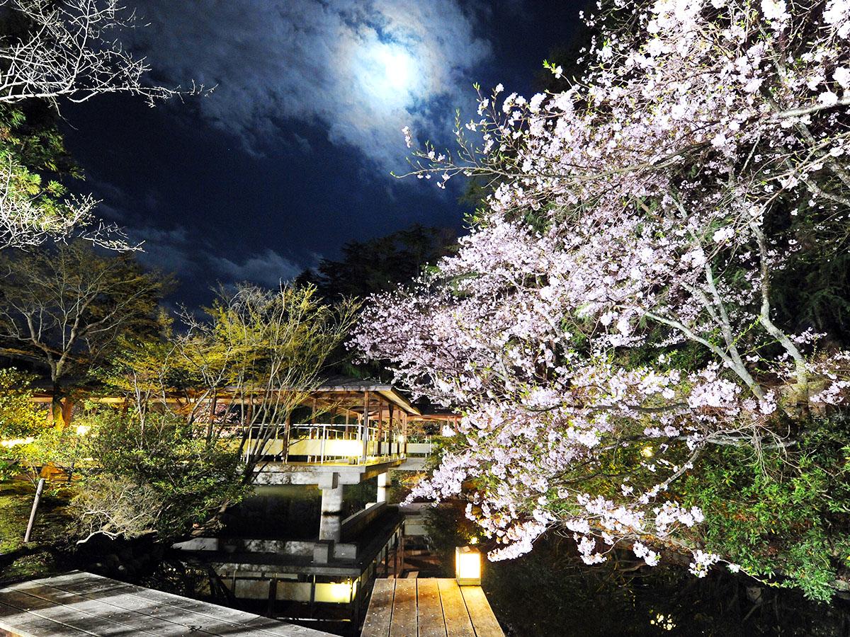 夜桜0DSC_6790_1200