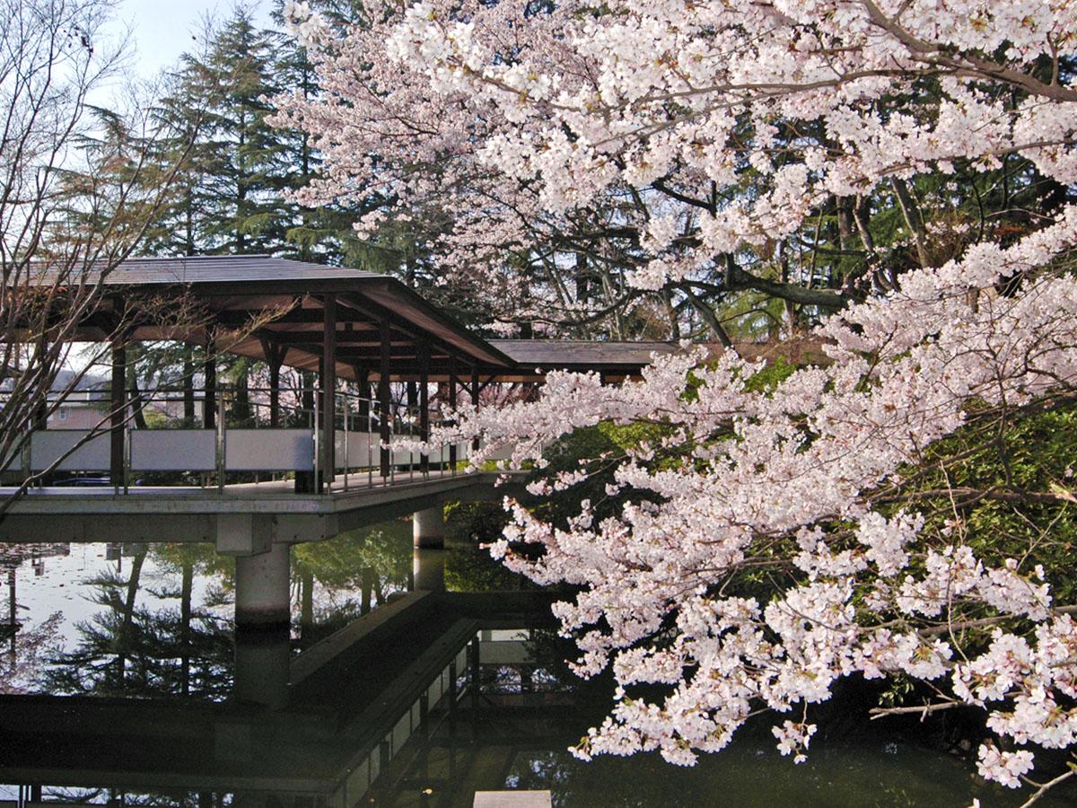 桜0DSC_6295_1200