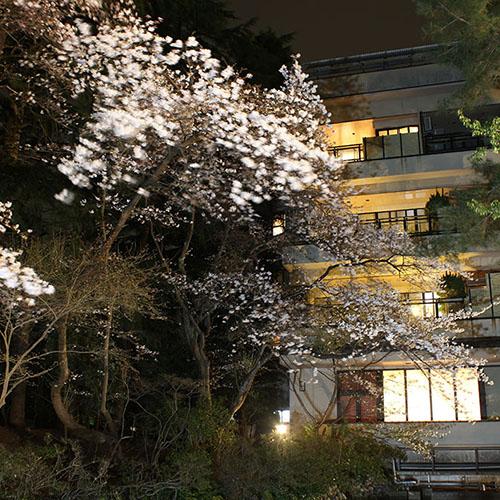 夜桜IMG_4090_350
