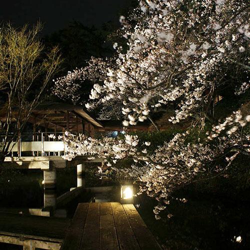 夜桜IMG_4079_350