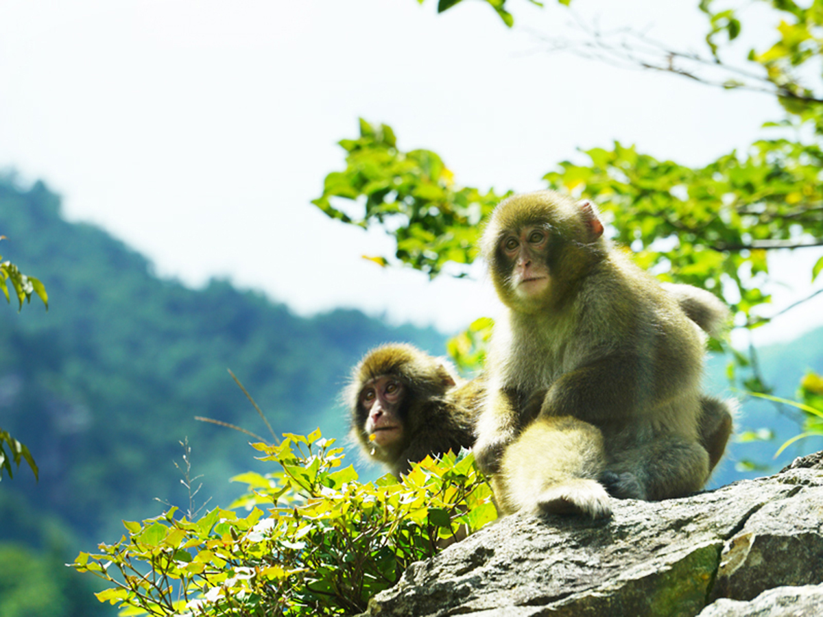 猿_補正_1200