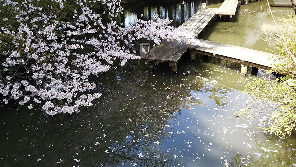 桜筏DSC_0133